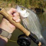 Fish Feeder Streams Now!