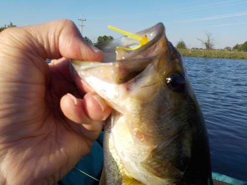 Springtime Success On Public Ponds