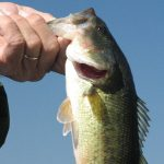 Thinking About Summer Largemouth Bass . . .