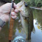 Stream Largemouths