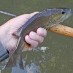 The Fishing's Good Upstream