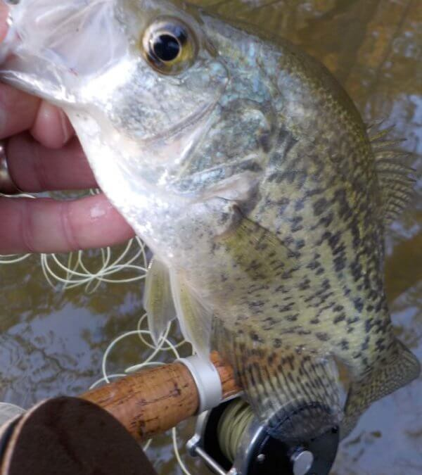 Cool Crappies