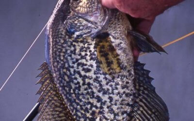 Fall Is Crappie Time, Too